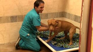 Fort Lauderdale Dog Boarding & Doggy Daycare