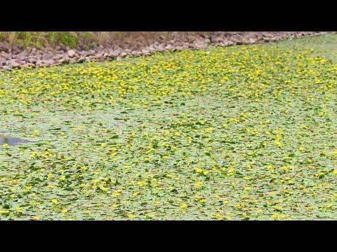 L'acqua del canale diventa un quadro di Monet
