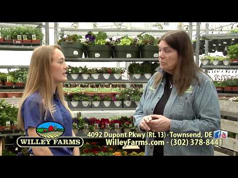 Willey Farms Show - April 2018