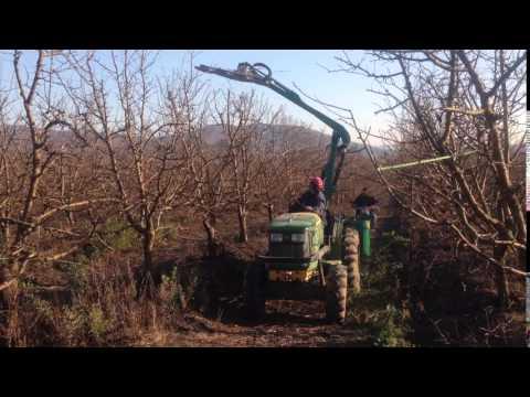 Poda Arboles Frutales Con Podadora Hidraulica 3 thumbnail