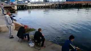 Туапсе. Майские выходные для рыбаков(Майские выходные для рыбаков в городе Туапсе особенно приятны - сейчас пошла