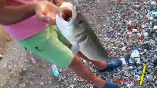 Levrek avı 2 izmir Serdar YILMAZ