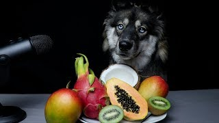 ASMR Dog Reviewing Exotic Fruits!