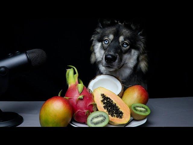ASMR Dog Reviewing Exotic Fruits!