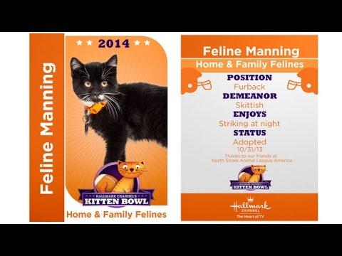 Thumbnail for Cat Video Kitten Bowl I - Feline Manning - Player Profiles