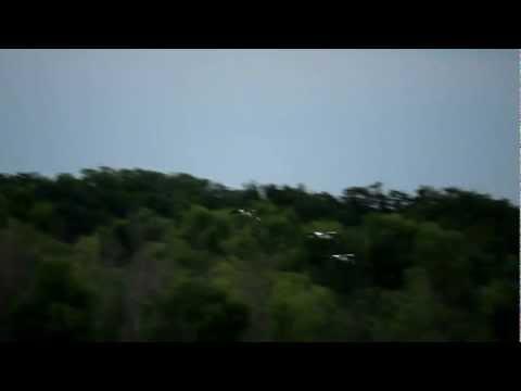 Texas Wood Storks In Flight