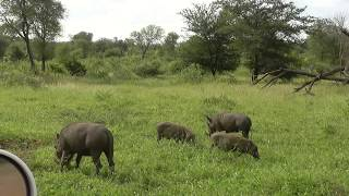 SOUTH AFRICA driving through kruger n.p. (hd-video)