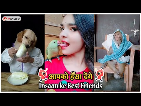 Funny Animal Videos || Cute Animals on VMate