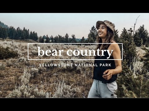 HOW TO NOT GET EATEN BY BEARS IN YELLOWSTONE
