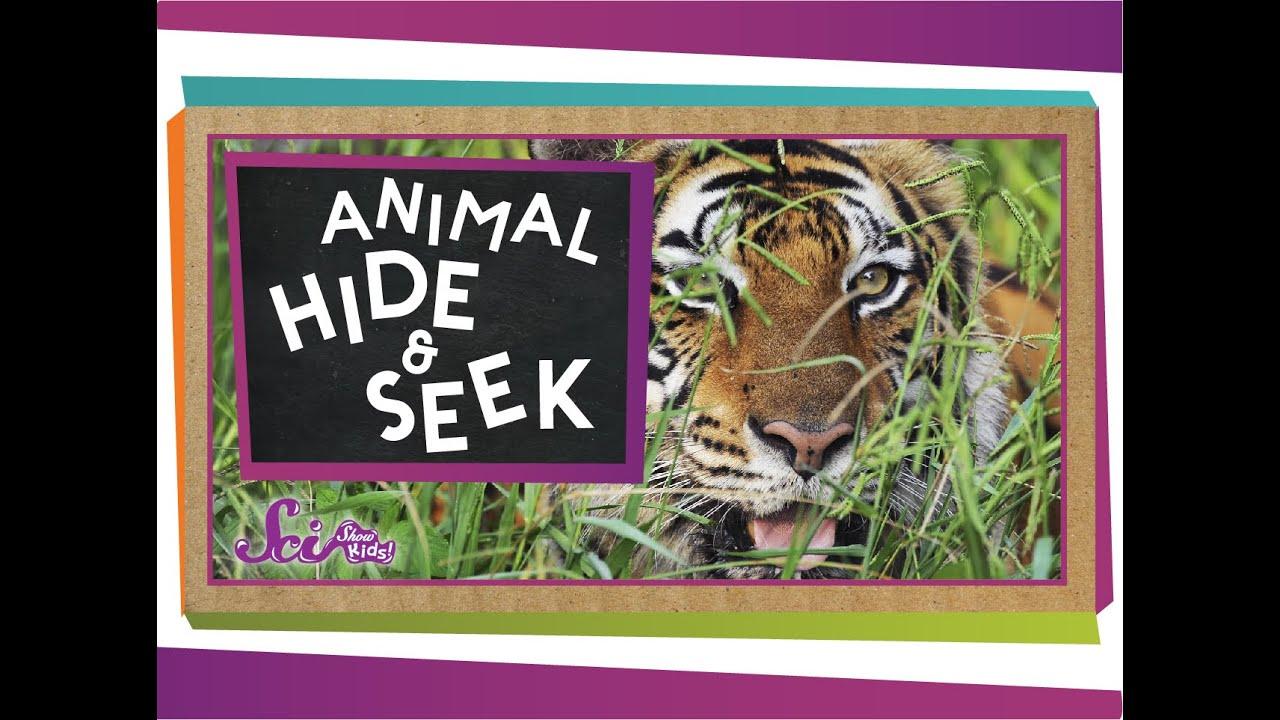 Camouflage: Animal Hide \u0026 Seek - YouTube [ 720 x 1280 Pixel ]