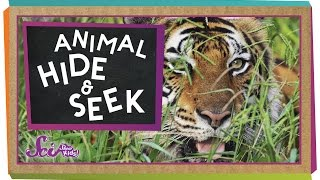 Camouflage: Animal Hide & Seek