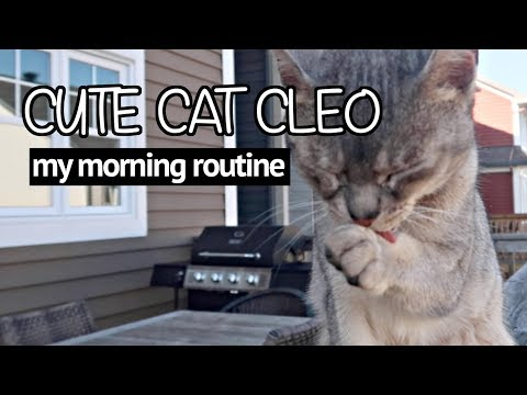 Abyssinian cats MORNING ROUTINE | CUTE CAT CLEO