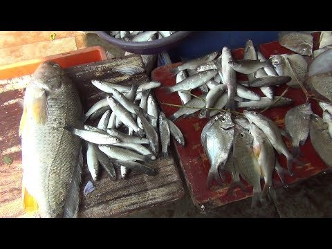 Ban On Fish Import: What Goan's Are Eating These Days... Watch