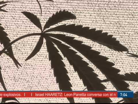 Descubren cultivo de cannabis en metro de Italia [Especial]