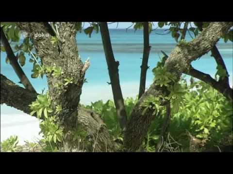 Bikini  Atoll Trauminseln im Sperrgebiet 2v5