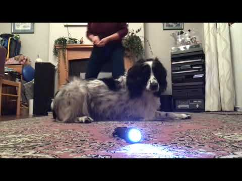 Dog training using Recallers games - What have Recallers ever done for us?