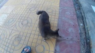 Кот с коротким хвостом на острове Пхи Пхи в Таиланде