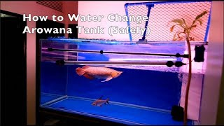 How To Water Change Arowana Tank