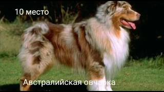 Топ 10 самых добрых пород собак!
