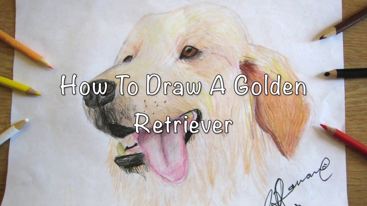 how to draw a golden retriever youtube