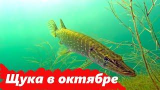 Рыбалка на щуку с берега на спиннинг Рыба с первого заброса