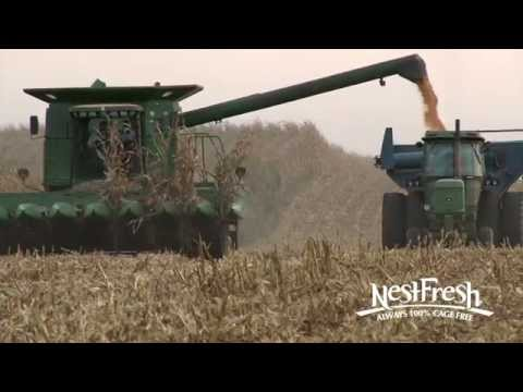 NestFresh Non-GMO Hen Feed