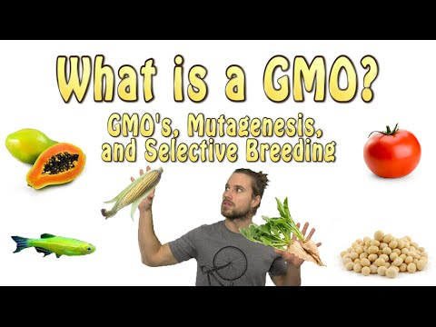 What is a GMO? GMO's, Mutagenesis and Selective Breeding