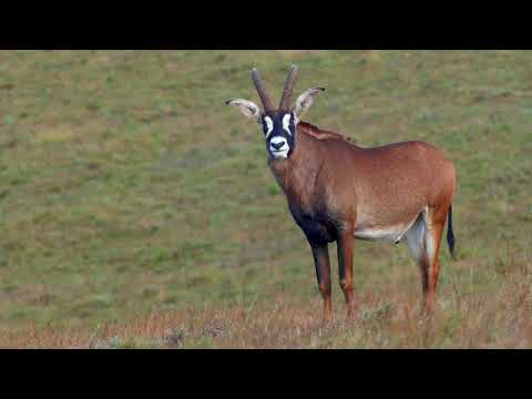 Nyika National Park &  Chelinda Lodge