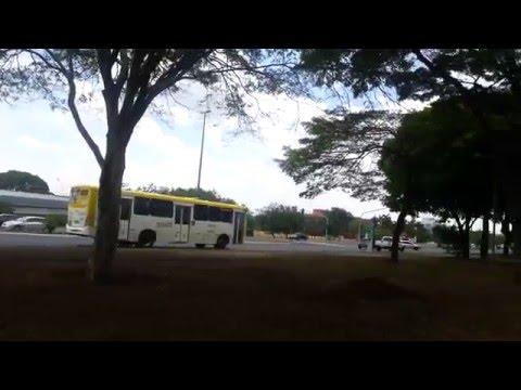 Brasilia by Flor