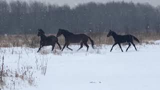 Прогулка в поле компании лошадей! Дикие мустанги)🐎🐎🐎