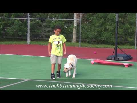 The K9 Training Academy - Elsa with Advance Obedience