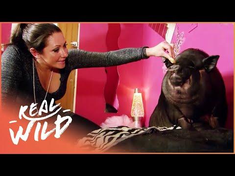 Small Animal Invasion! [Super Tiny Animals Documentary] | Wild Things