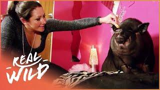 Small Animal Invasion! [Super Tiny Animals Documentary] | Real Wild