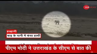 बाढ़ के पानी में फंसा हाथी, बेजुबान पर भी बारिश का कहर | Flood | Elephant Trapped | Uttarakhand News