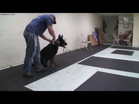 Protection Training using Door