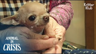 3-Year-old Dog Stopped Growing Despite Owner's Cordial Love And Care | Animal in Crisis EP136