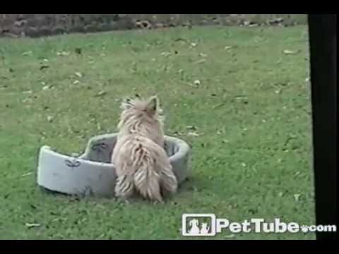 Dog Flips Out for His Bed- PetTube