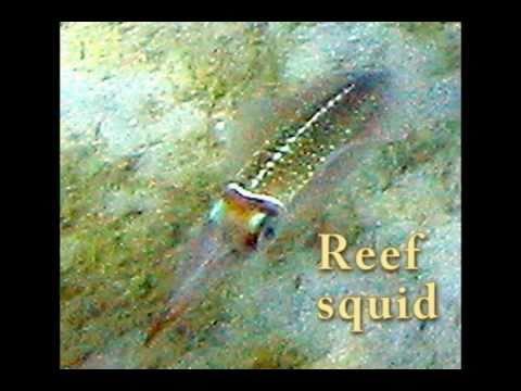 Caribbean Marine Animals with Identifications -- re-edit