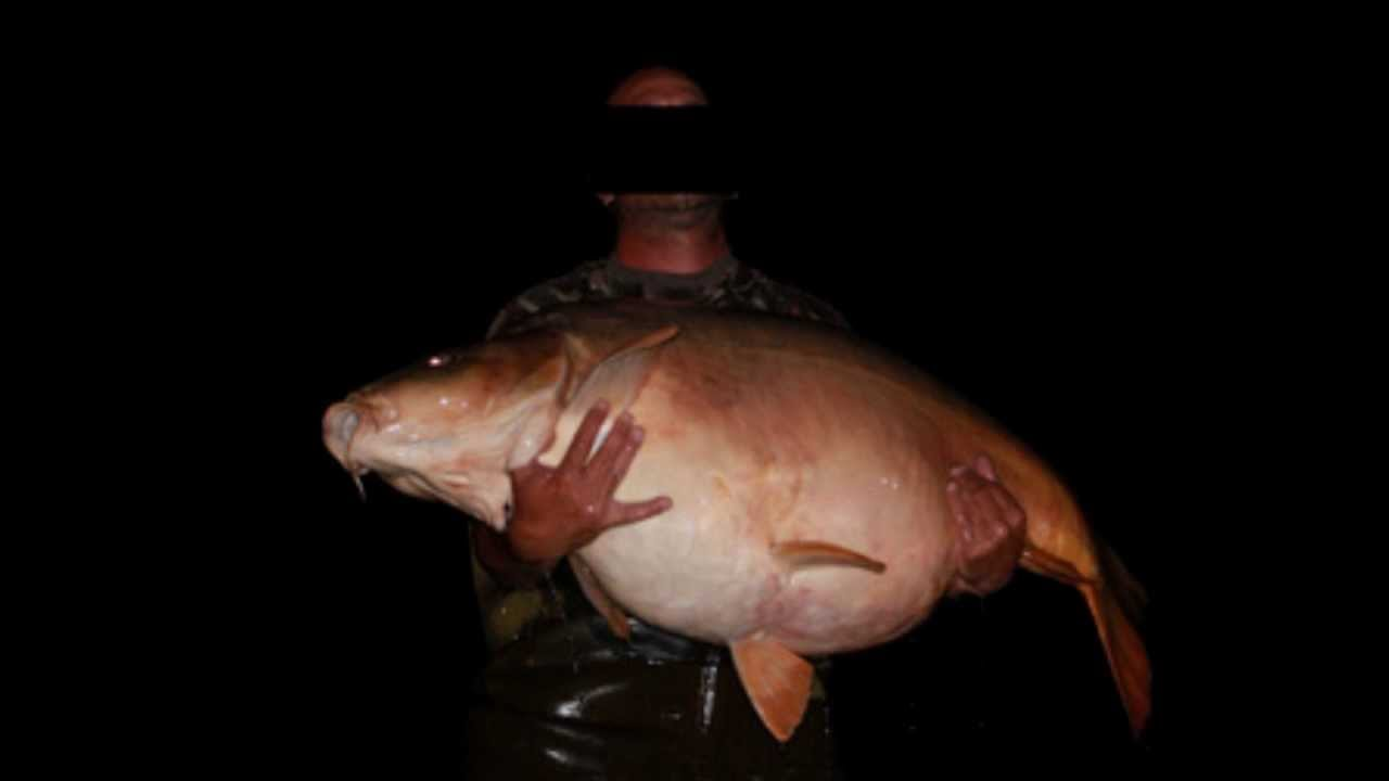 Biggest Carp Caught Ever More Then 50 Kg Youtube