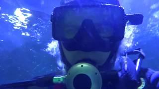 видео Дайв-центр в «Крокус Сити Океанариуме» открыт!