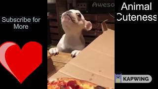 INSANELY CUTE ANIMAL FAILS AND ADORABLENESS!! MUST WATCH!! TRY NOT TO DIE OF CUTENESS!! NEW 2019