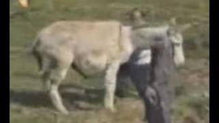Kåt Esel