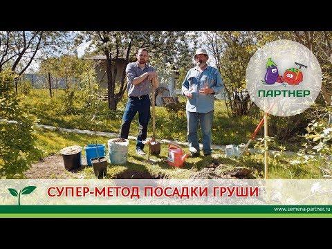 Как приготовить яму для посадки груши