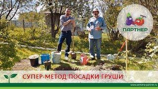 СУПЕР-МЕТОД ПОСАДКИ ГРУШИ