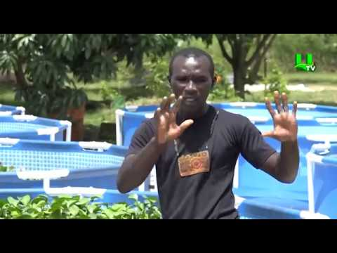 AYEKOO: Bio Green Agro Fish Farming
