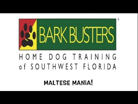 Maltese - STOP BARKING - Dog Training of Fort Myers K9 - Patrick Logue Dog Trainer