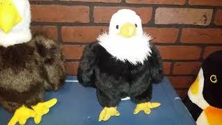 HAYS EAGLES & HARMAR EAGLES REPRESENTATIVES PLEA TO HUMANS