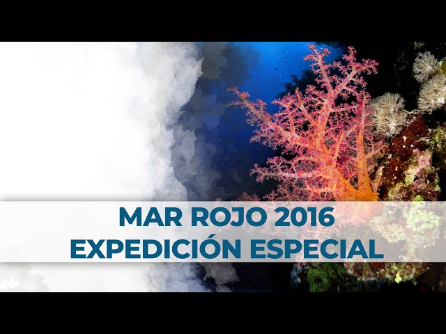 2 Little Divers Red Sea - Mar Rojo Expedición Especial 2016