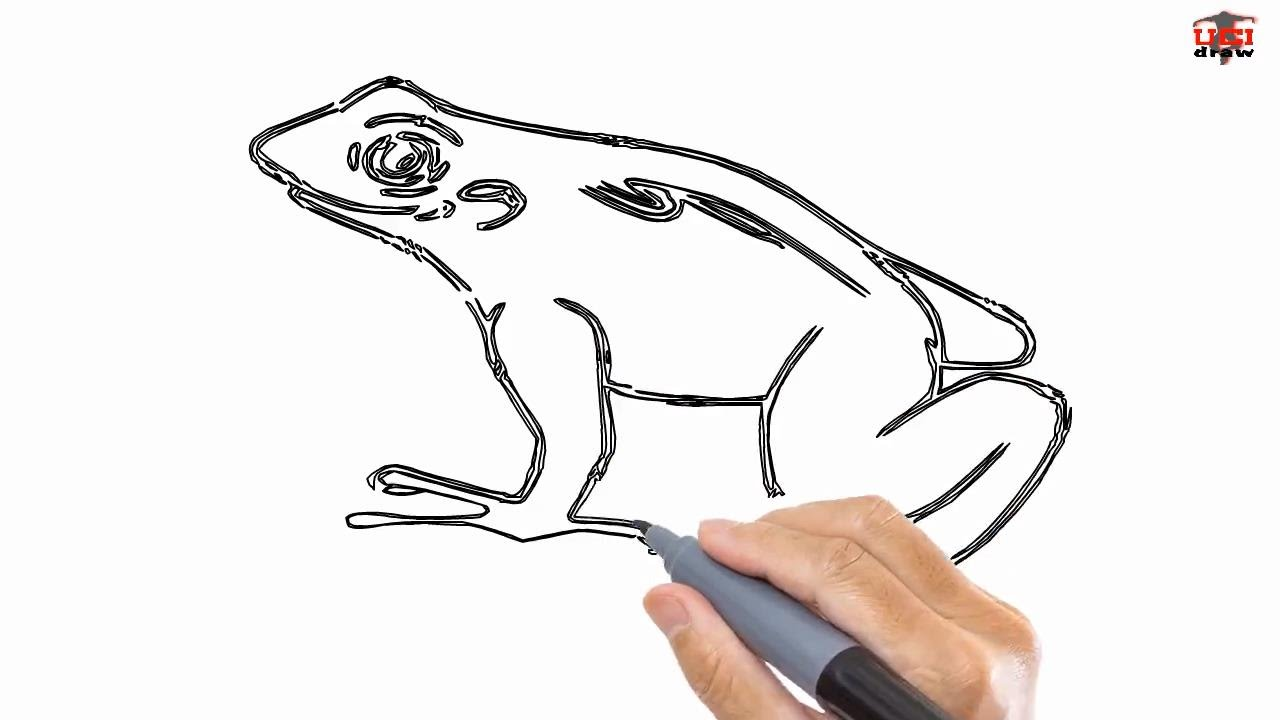 Uncategorized Draw A Frog Step By Step how to draw a frog easy drawing step by tutorials for kids kids