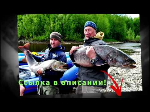 Как использовать активатор клева Fish xxl hungry
